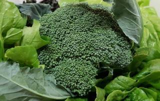 Broccoli Brunch als Tipp