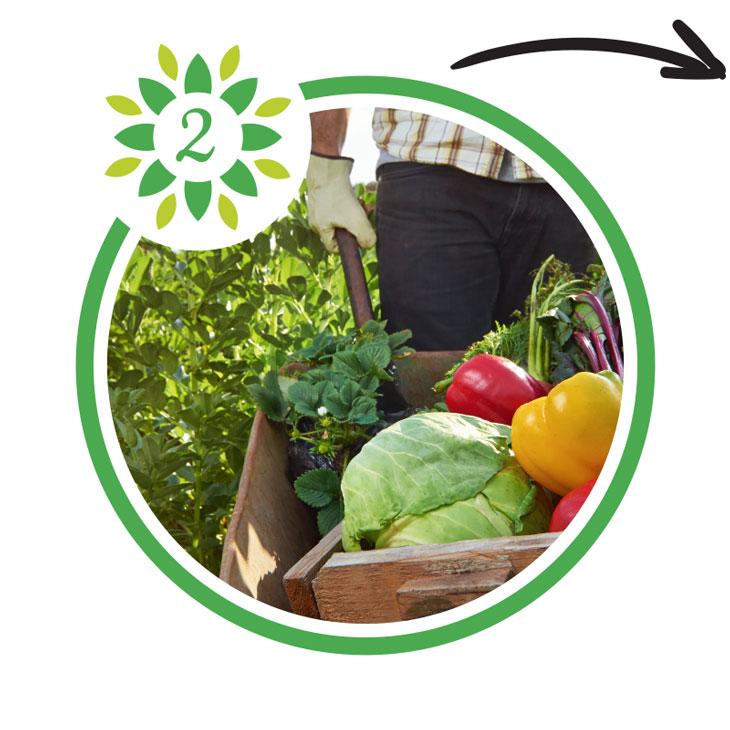 Regionales Gemüse, Obst und Salat Lieferservice