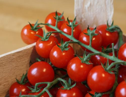 Halbgetrocknete Cherrytomaten