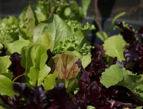 Frühlingsgemüse und Salat