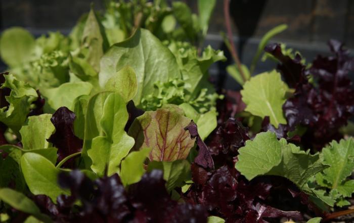 Gemüse und Salat im Frühling