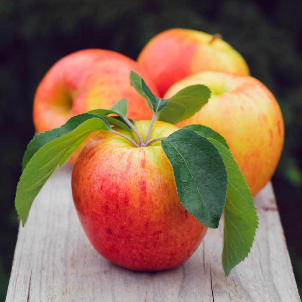 frischer Gala Apfel