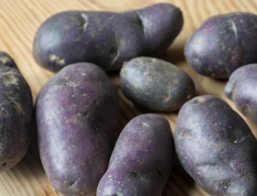 Schwarze Kartoffeln an einer Rosmarin-Marinade