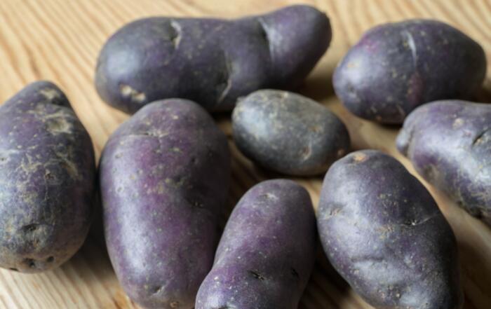 frische Schwarze Kartoffeln